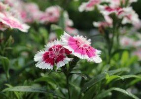 Flower Sale Web Pic